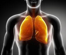 Life Insurance with COPD - Lung Photo